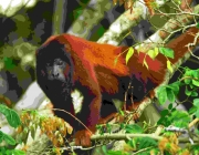 sandoval lake reserve lodge tambopata tours nature travel peru