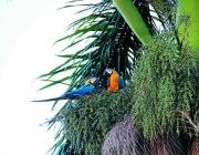 sandoval lake reserve lodge tambopata tours nature travel peru