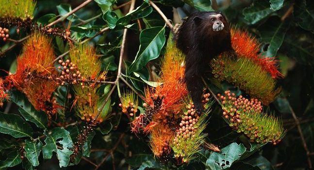 amazon wildlife sandoval lake tambopata lodge reserve