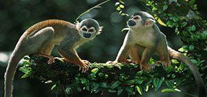 Tambopata Amazon Nature Wildlife - Tambopata Clay Lick 3days