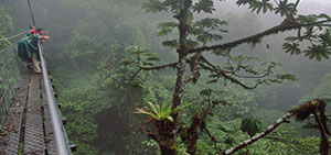 Tour Rainforest 4days / 3nights sandoval lake