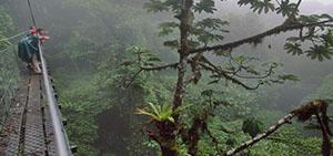 Tour Rainforest 4days / 3nights sandoval lake
