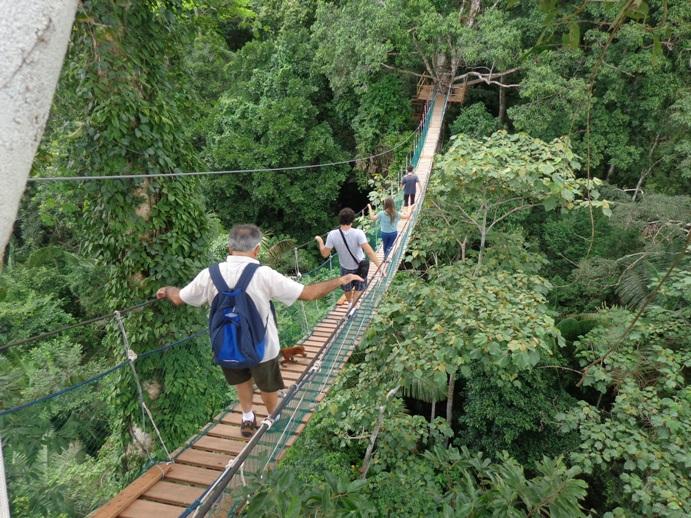 tour rainforest