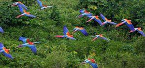 Reserve Expedition Macaw Clay Lick Tambopata Sandoval lake