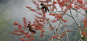reserve sandoval lake lodge tambopata amazon wildlife