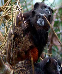 Wildlife Travel – Sandoval Lake Lodge 3 days