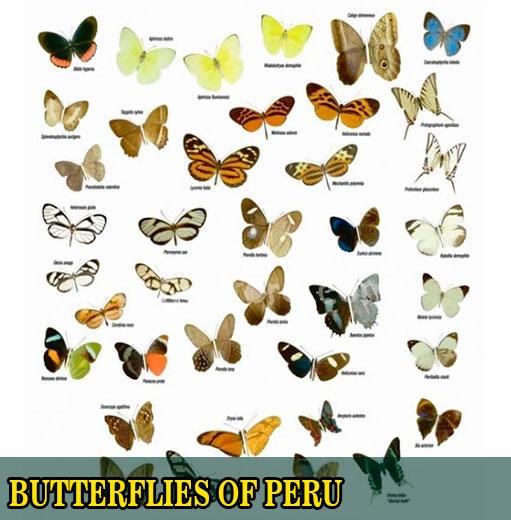 sandoval lake butterflies peru