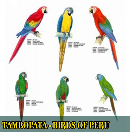 Sandoval lake lodge birds of peru