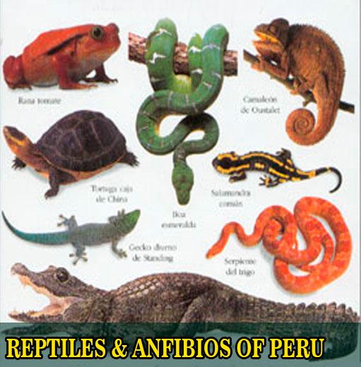 sandoval lake reserve reptiles anfibios of peru