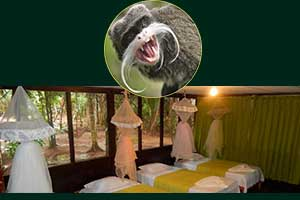 sandoval lake lodge reserve tambopata tours