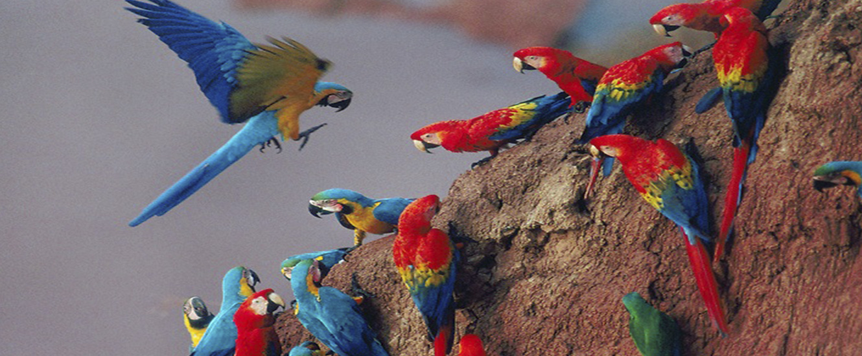 amazon wildlife sandoval