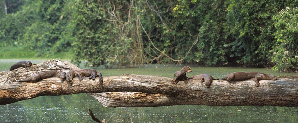 sandoval lake lodge peru wildlife