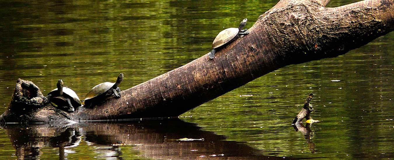 Reserva Lago Sandoval -Tambopata Amazon Nature Wildlife – Colpa Guacamayos 3dias