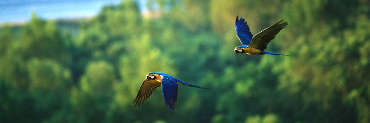 Reserve Expedition Macaw Clay Lick Tambopata - Lago Sandoval 4dias