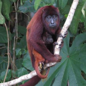 amazon trips sandoval lake reserve